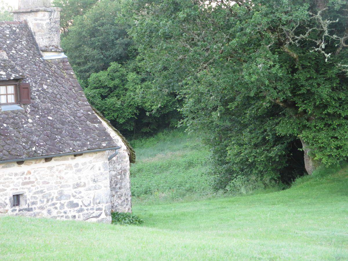 L'entrée du petit sentier qui descend à l'autre hameau s'orne d'une digitale fièrement dréssée dans les fougères