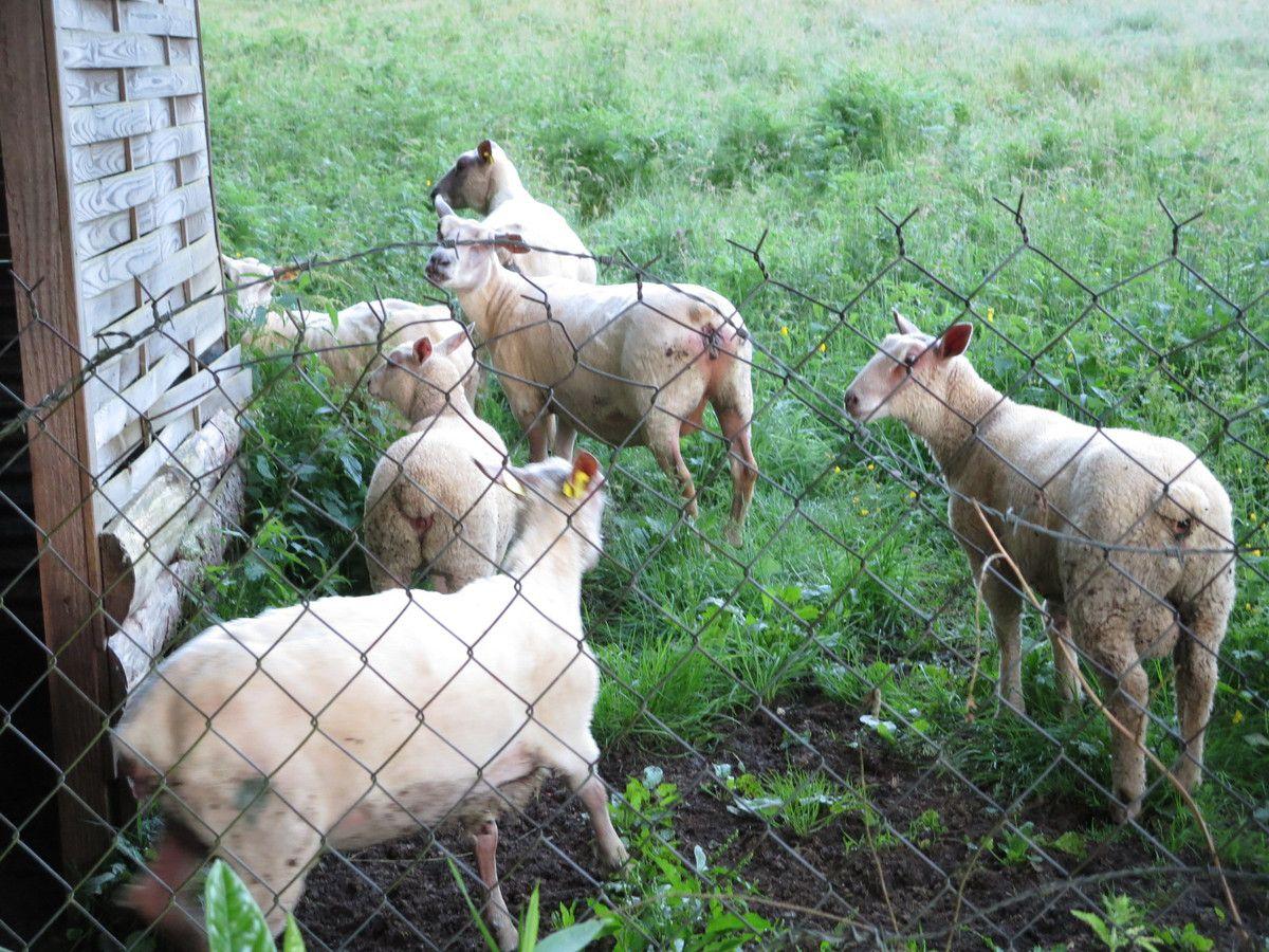 Mais revenons.... à nos moutons!!!! (que je viens de réveiller!!!)