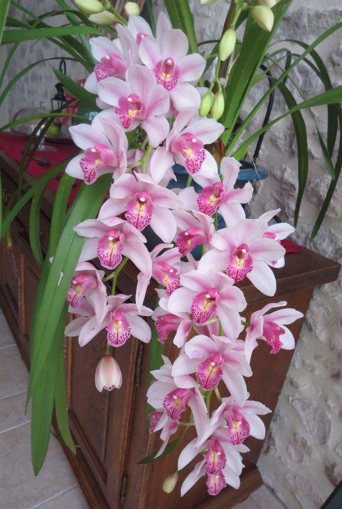 Voici des fleurs et des bouquets à foison,  pour que chacune y trouve,  un doux langage d'amour.