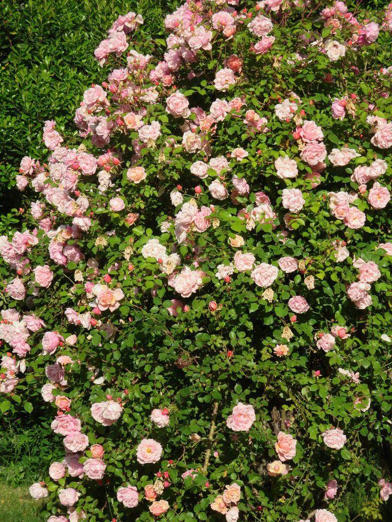 """Et des fleurs , beaucoup de fleurs....""""c'est comme des parfums qu'on respire"""""""