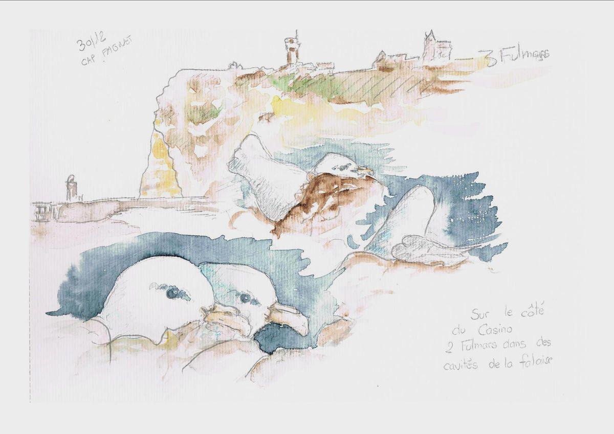 Trois fulmars se réfugient dans les cavités de la falaise. Au loin le cap Fagnet .