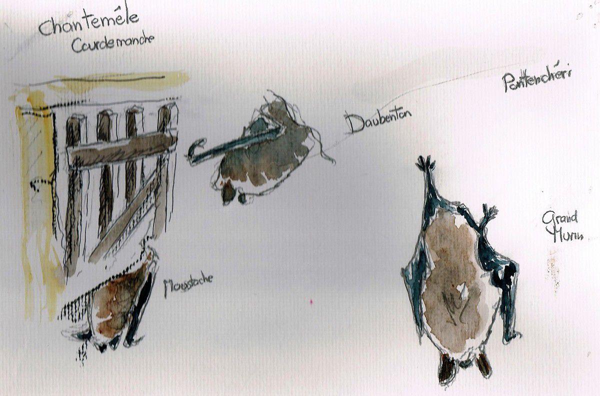 Le 11 et 12 février. Comptage chauve souris en Sarthe