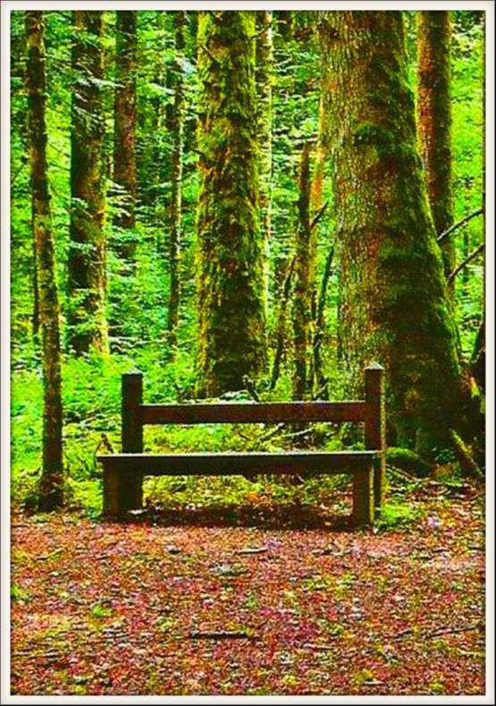 banc - forêt de Joux - sapins présidents