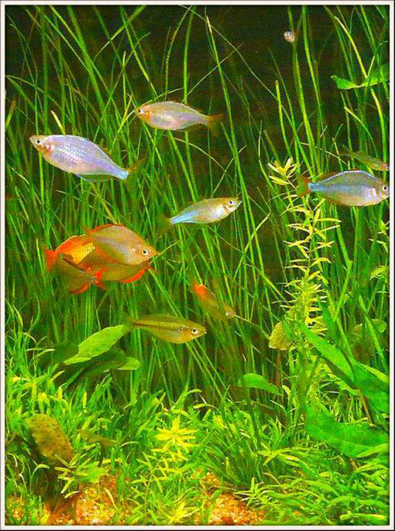 Images poissons batraciens balades comtoises for Aquarium 1 poisson