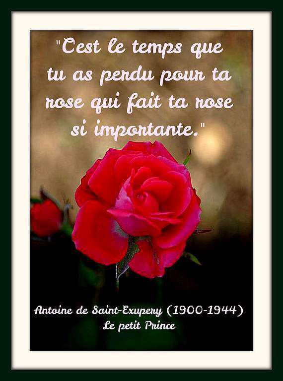 citation rose