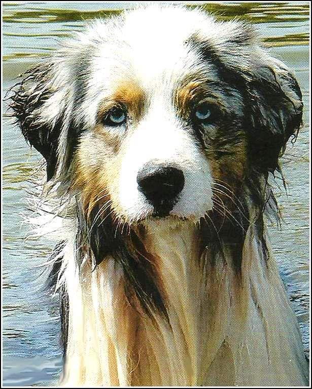 Images chien