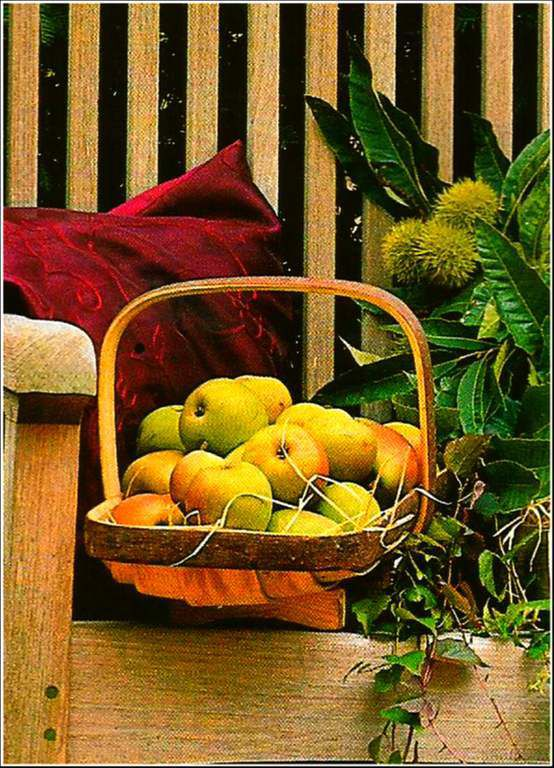 Fruits - pommes