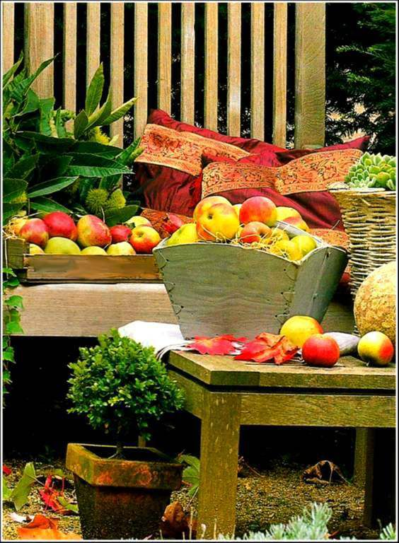 Fruits - pommes