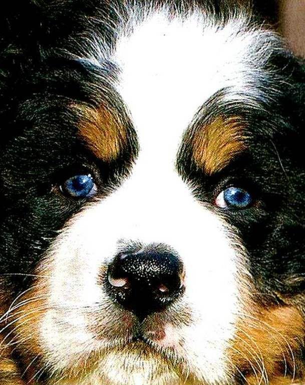 Images chiens