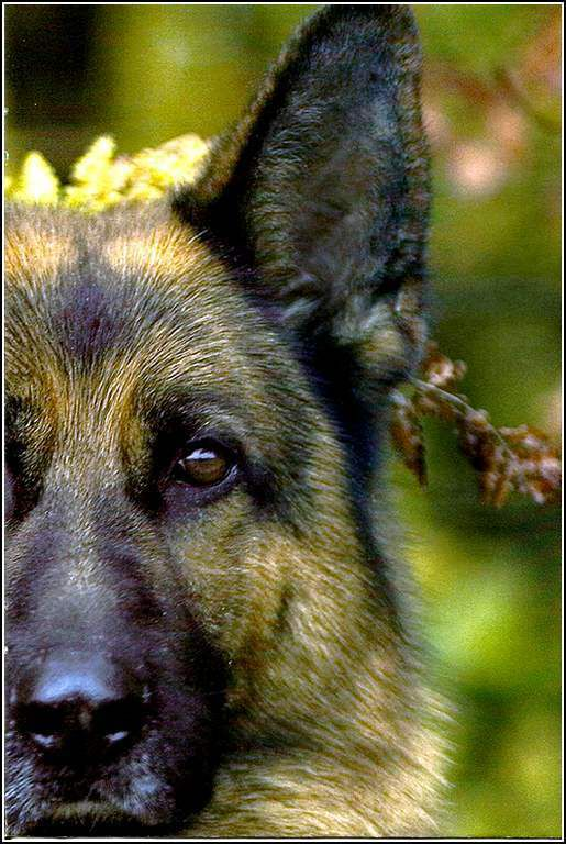 Images chiens