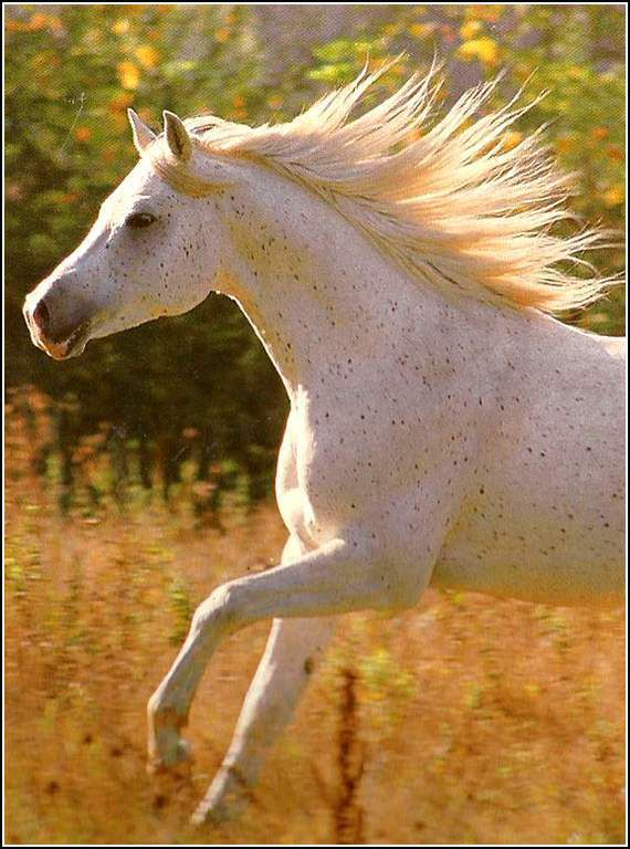 Images chevaux