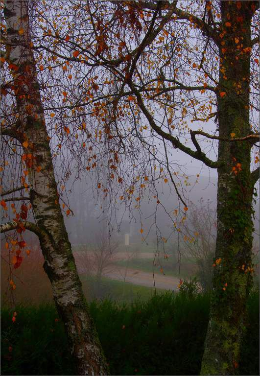 Brouillard d'automne - Evans - Jura