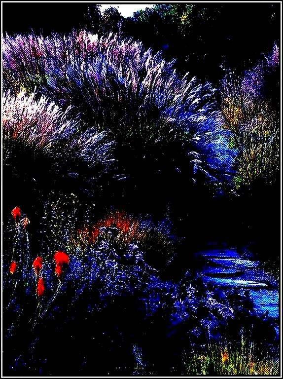 Images nature - féerique