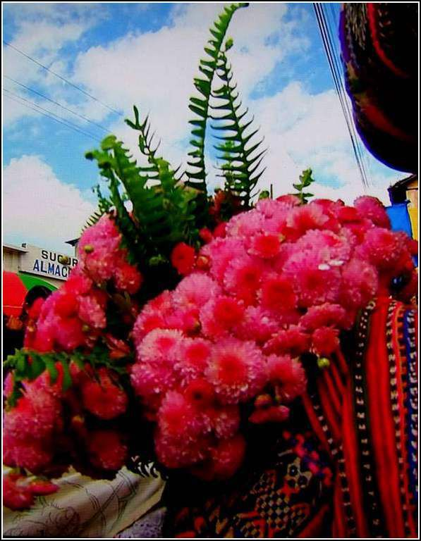 Les fleurs - marché de Solola - Guatemala