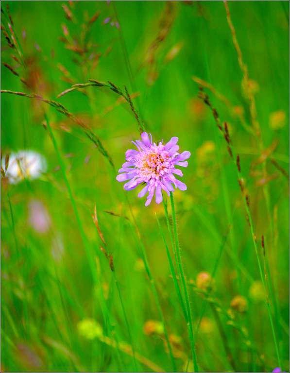 Images printemps