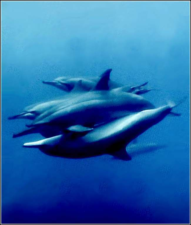 Animaux marins - dauphins