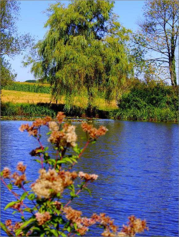 Evans - Jura - les étangs