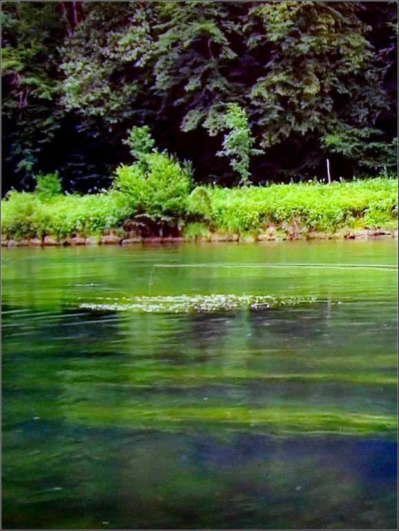 La Loue - La Piquette (Doubs)