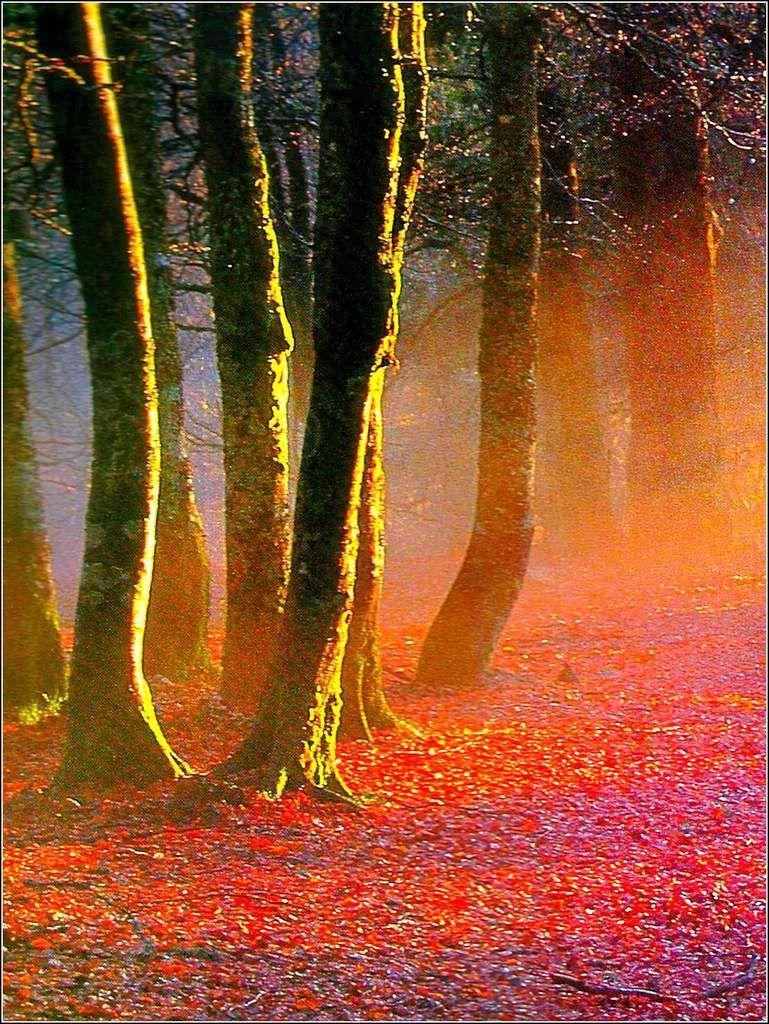 L'automne - forêt comtoise