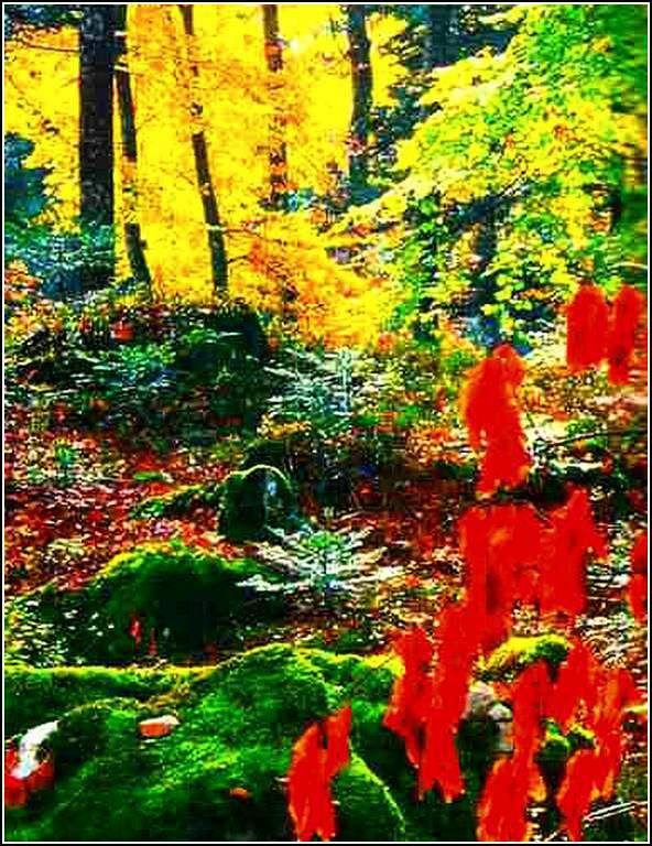 Forêt de Chaux - Jura