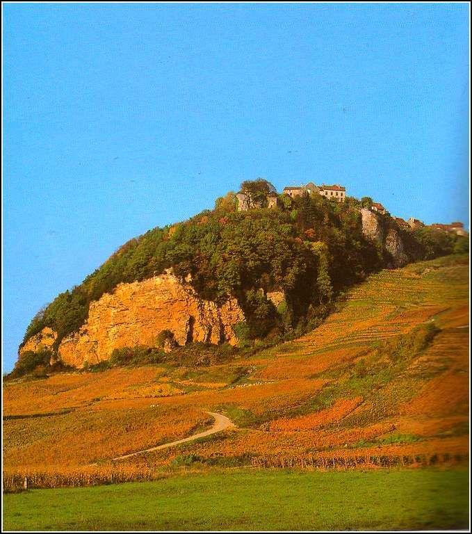Chateau Chalon - vignes