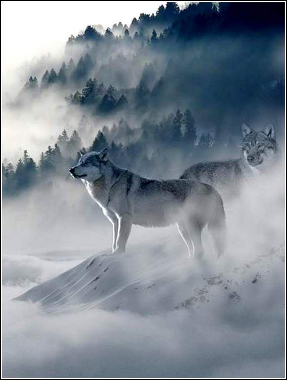 Animaux sauvages - loups