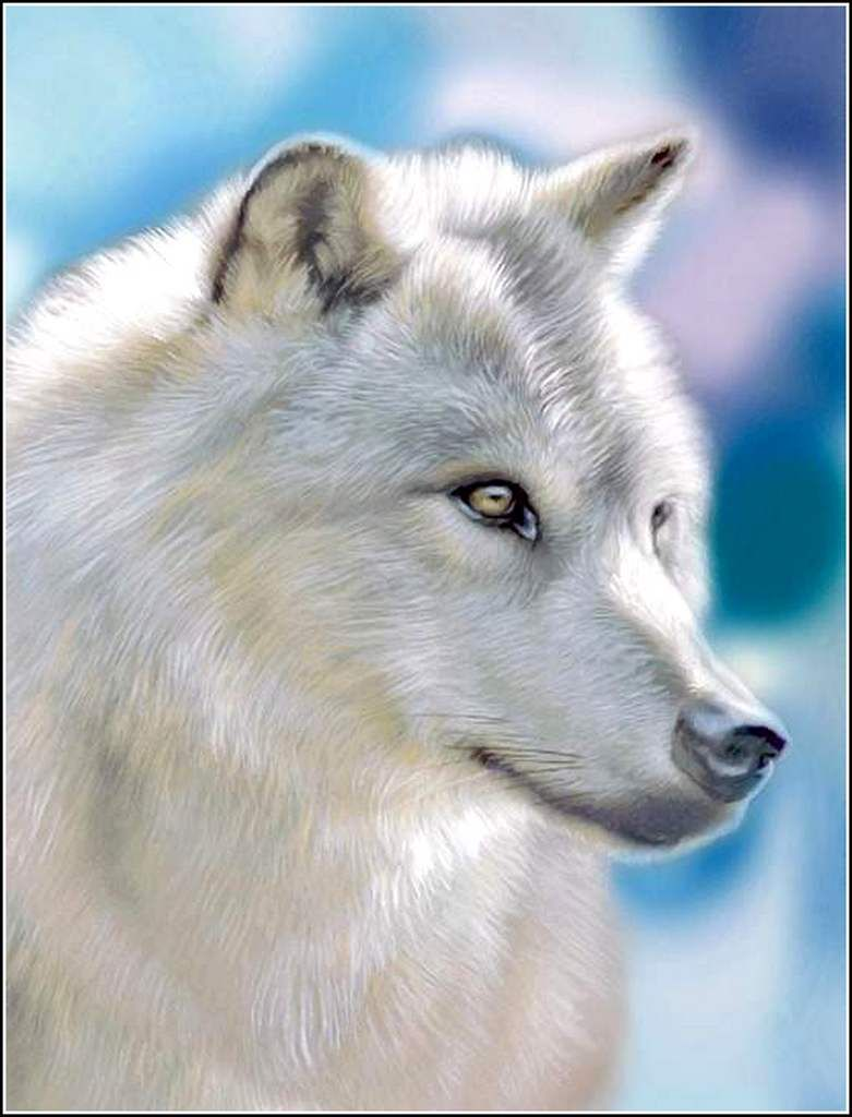 Animaux sauvages - loup blanc