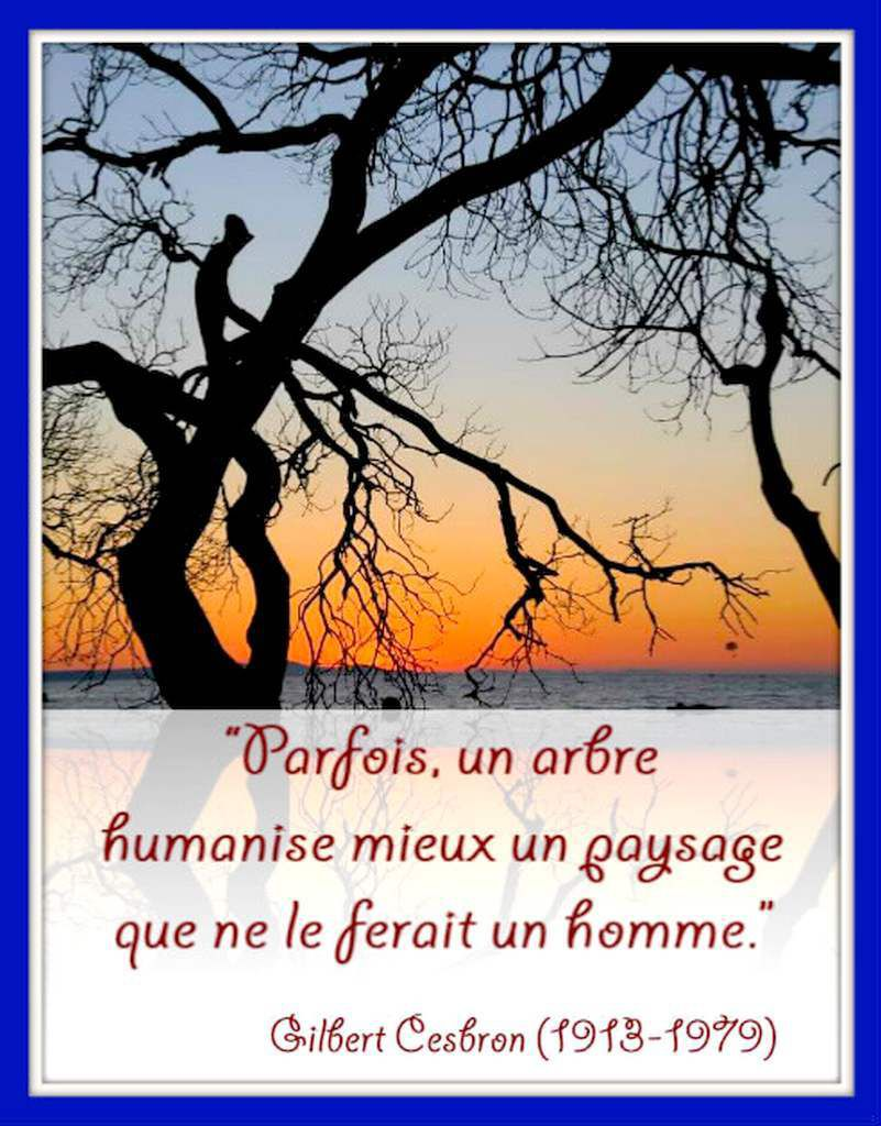 Citation &quot&#x3B;arbre&quot&#x3B;  de Gilbert Cesbron