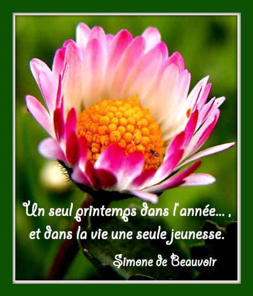 Citation &quot&#x3B;printemps&quot&#x3B; de Simone de Beauvoir