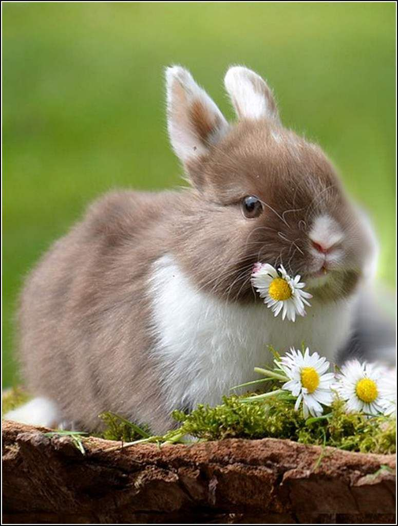 Images animaux campagne - lapin