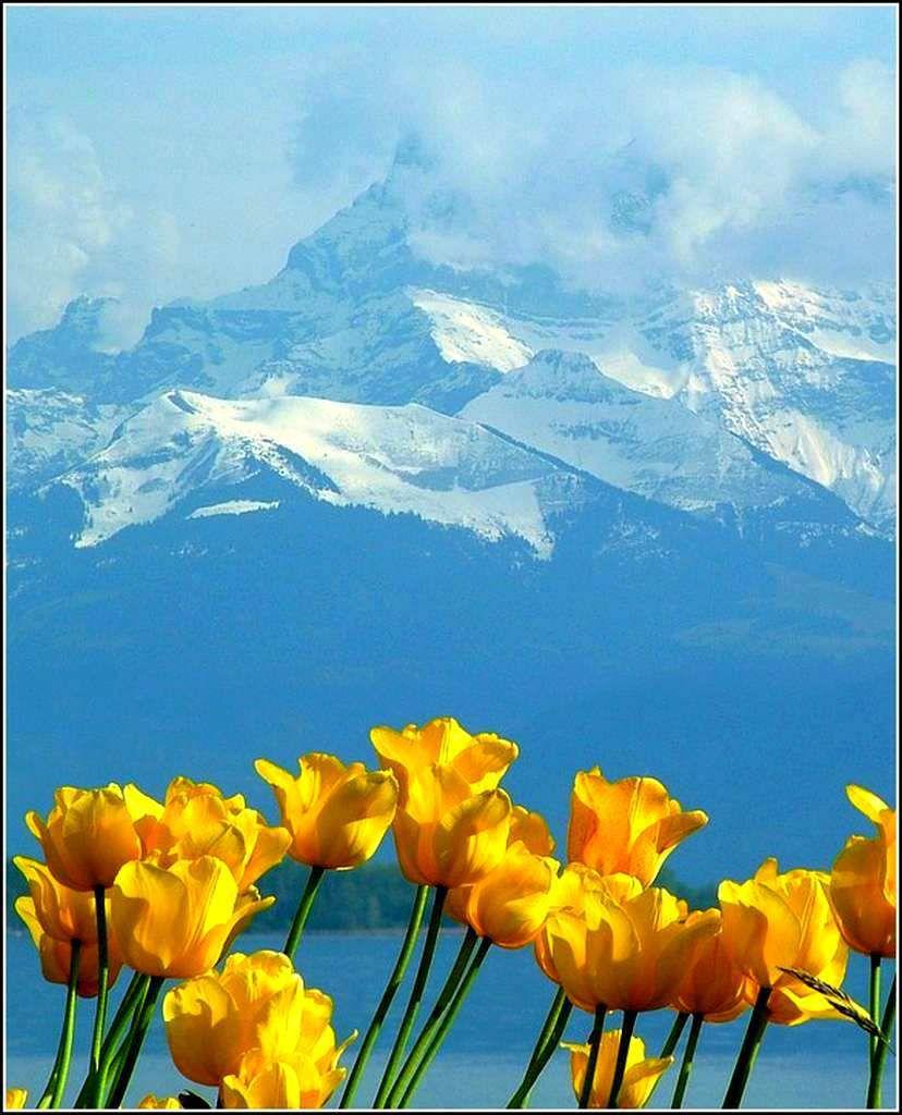 Suisse - Alpes