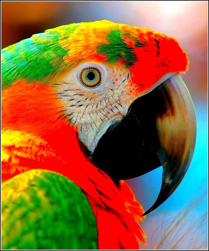 Les couleurs en images - ara