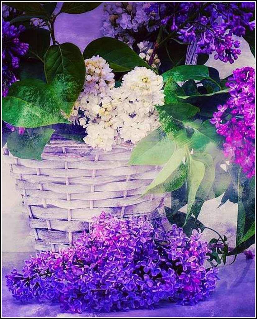 Les fleurs - lilas
