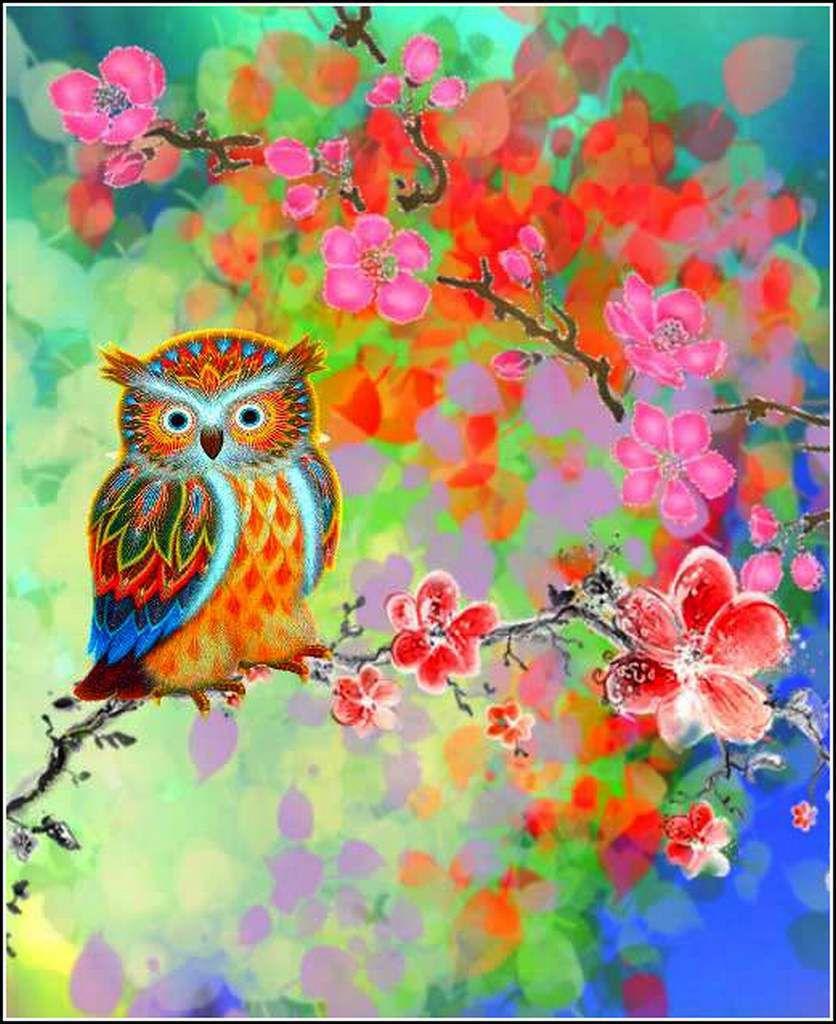 Les couleurs en images - oiseaux