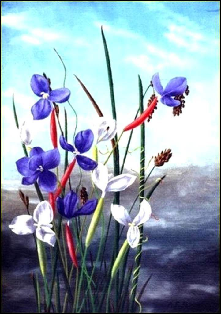 Les fleurs par les grands peintres (45) - Ada Frances Butler (1871-1914)
