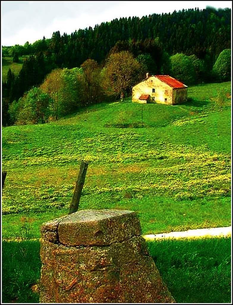Les Hautes Combes (près de Bellecombe) - Jura