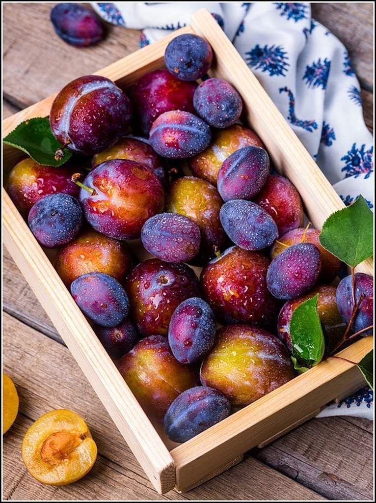 Fin d'été - les prunes