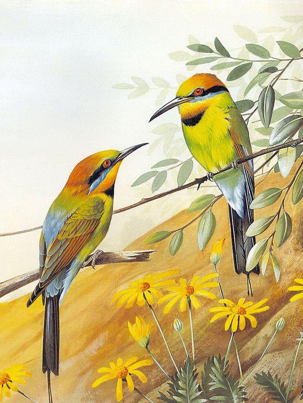 Oiseaux en peinture - Norman Arlott (1947)