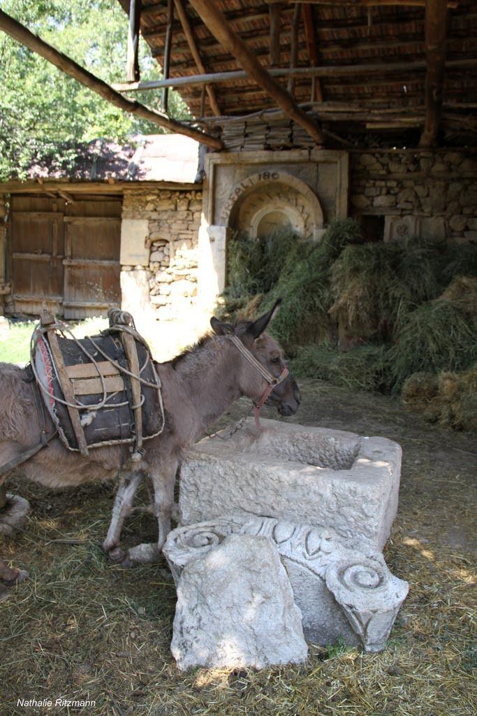 La mule semble intéressée par cette pierre, peut-être un ancien pressoir - Ağlasun, Turquie