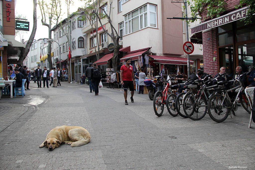 Chien de rue à Büyükada, Istanbul