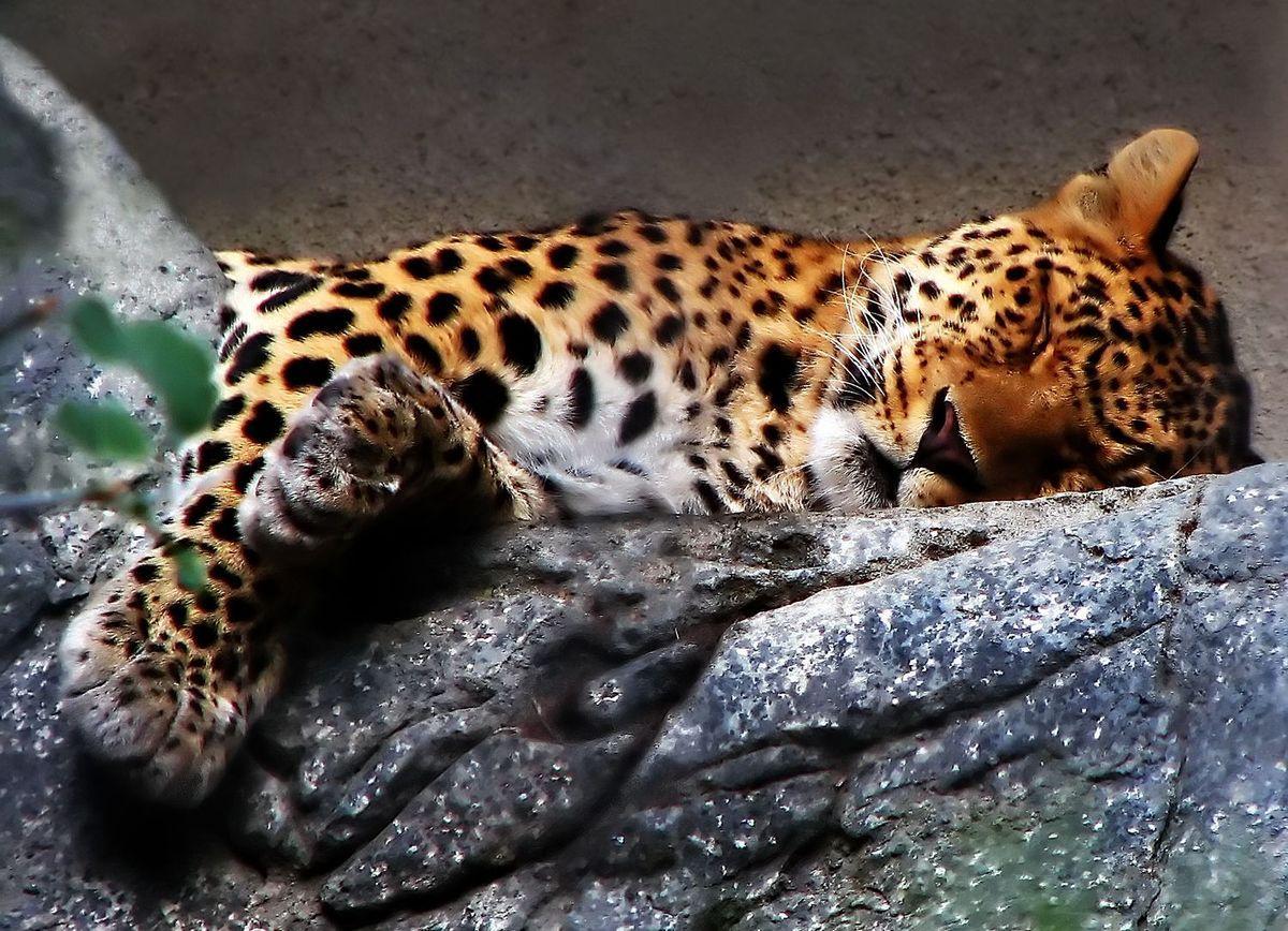 Le rêve du jaguar