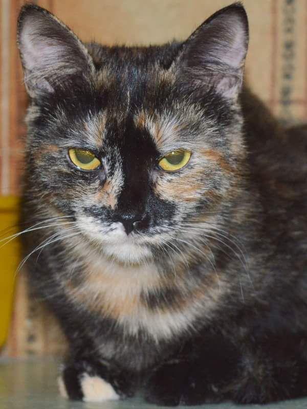 NEBRASKA di Profumo di gatto European Cat / female