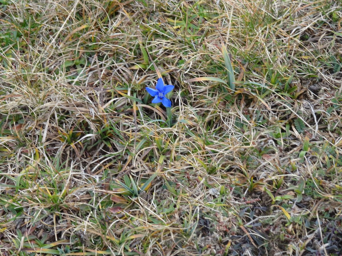 Clichés 22  : Circuit Croix de l'Alpe-Pinet-Fouda blanc