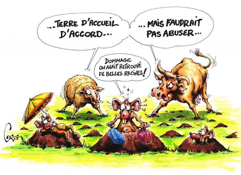 """et oui... """"les racines"""", on les prend facilement en Auvergne."""