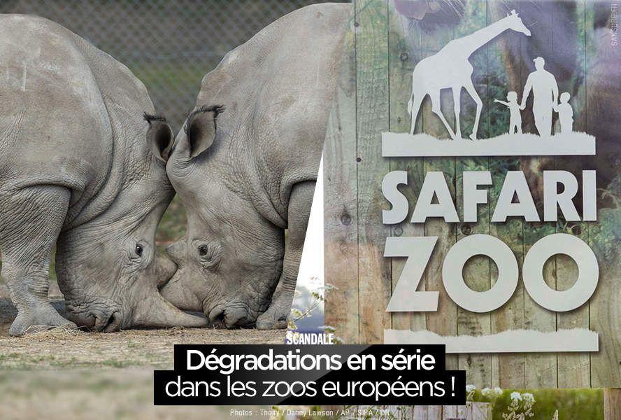 Dégradations en série dans les zoos européens ! #Thoiry