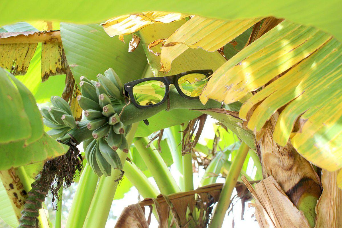 Mes lunettes en bambou ShinyWood