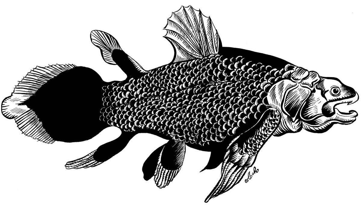 Coelacanthe.