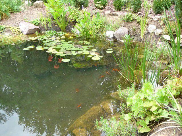 Autre vue du bassin.