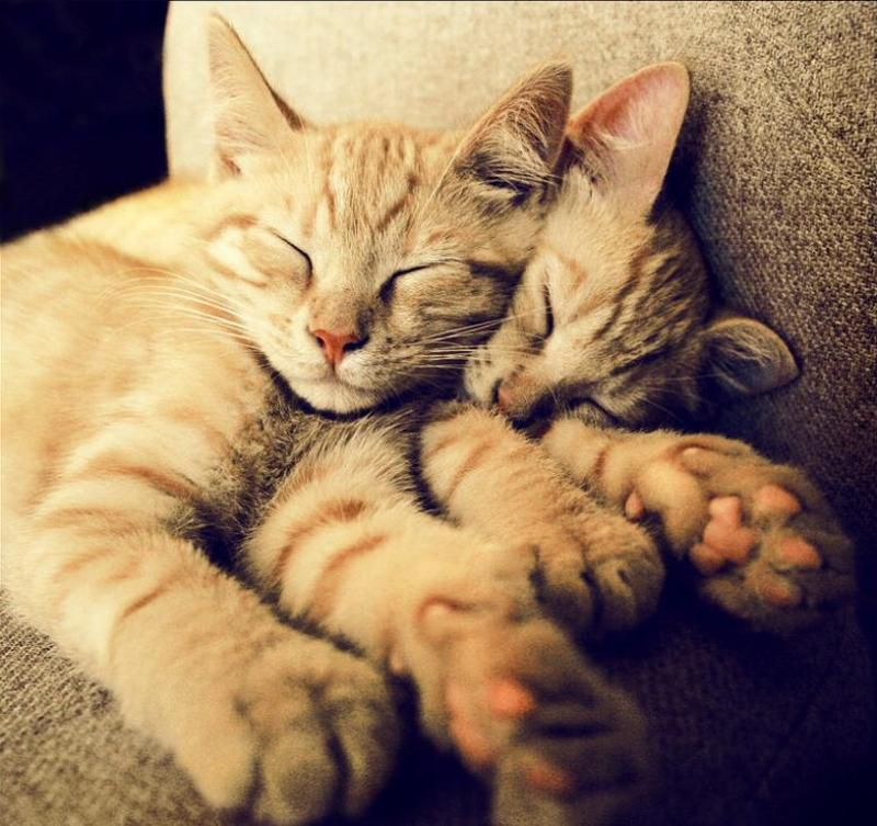 Belles images de chats.