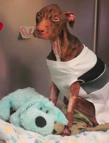 Belle histoire : le sauvetage du chien Patrick.
